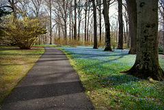 Nature's Blue Carpet