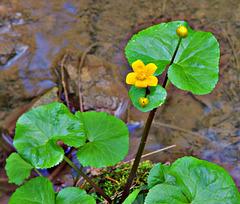 3 (6)..austria flower