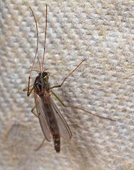 Moth IMG 8184