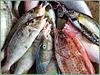 Victoria : il pesce è l'alimento base di queste isole equatoriali