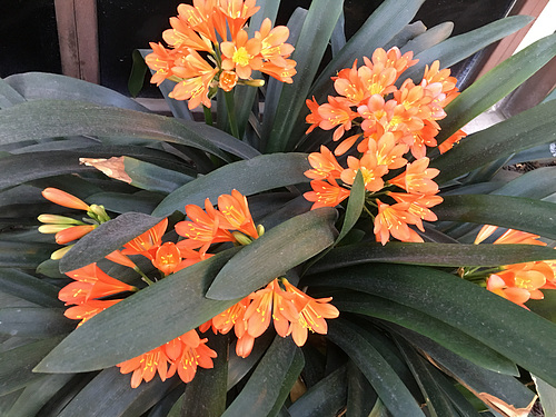 Orange Flowers (0363)