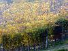 acquarellando l'autunno