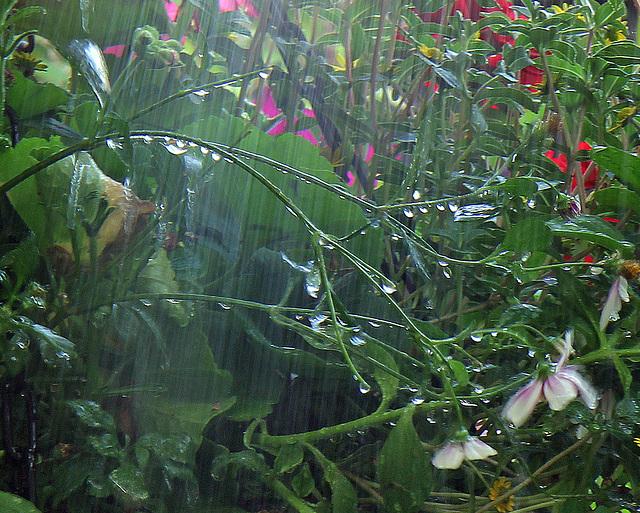 Monsoon jungle