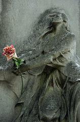 L'important c'est la rose ......