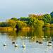 Petersfield Heath Lake