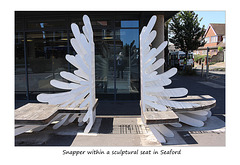 Snapper in sculptural seat in Seaford - 25.6.2018