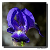 Iris 2021 ...