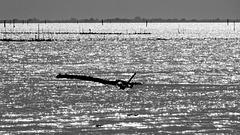 HFF - Zäune im Wasser ...