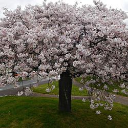 un jour de printemps particulier