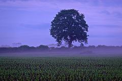 Misty fields near Gnosall
