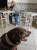 Juno at a cafe, Portugal