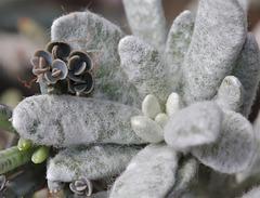 câlins de plantes