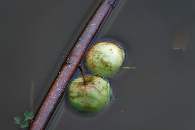 Watery Shapes And Apples