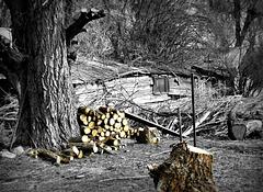 Absent woodsman