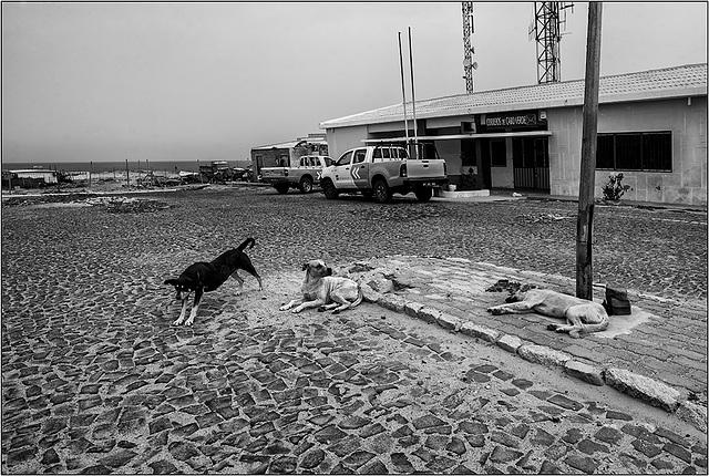 Vie de chien...