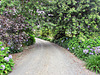Up a Garden Path.