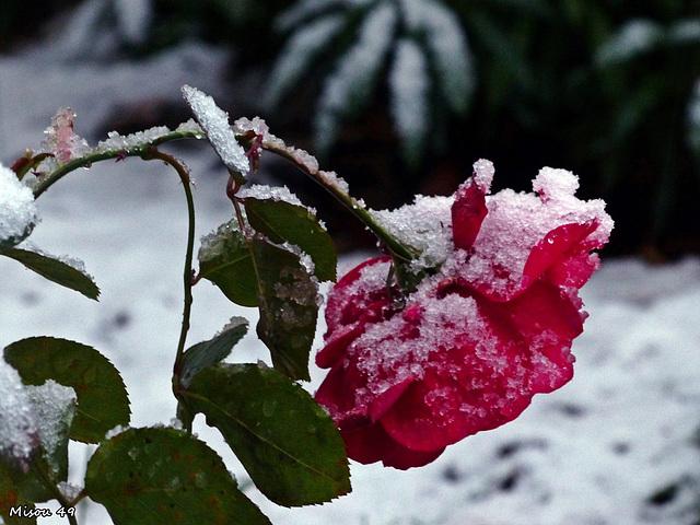 La neige à Angers le 6 février 2018