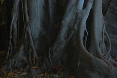 Der Stamm des Baumriesen