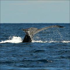 Sea world:)