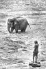 Sri Lanka tour - the fourth day - Pinnawala Elephant B&W overexposed