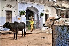 Scène de rue à Pushkar