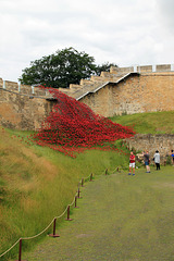 Poppies wave ~ WWI and Battle of the Somme memorial ~ LEST WE FORGET
