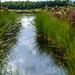 Kultivierte Moorlandschaft - Renaturierung