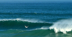 Sea, gull and spray
