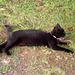 Street cat.