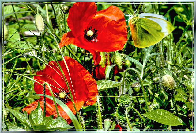 From a flower meadow... ©UdoSm