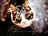 The Odd Eyed Cat