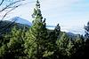 Im Esperanza-Wald. Blick zum Teide. ©UdoSm
