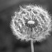 SSC:  nature in b/w