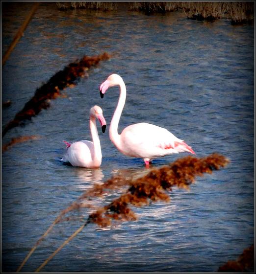 Duo au Parc ornithologique du Pont de Gau