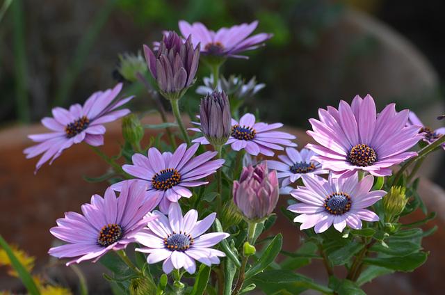 Premières floraisons