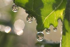 SSC: Wassertropfen