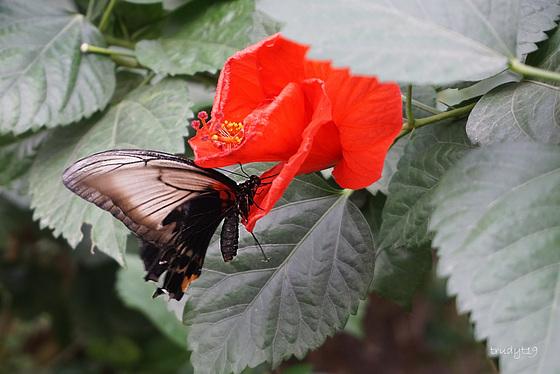 luttelgeest, vlindertuin