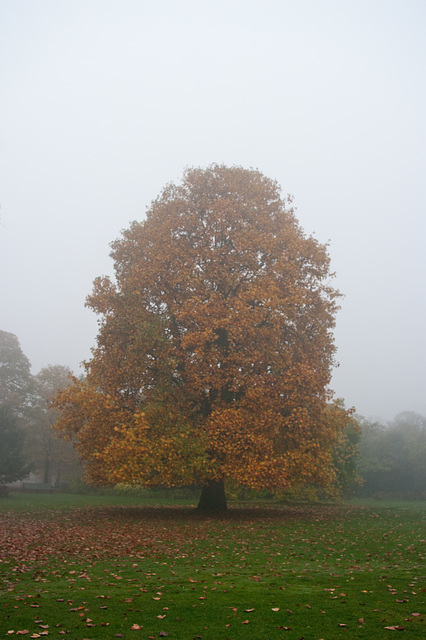 lone tree colours