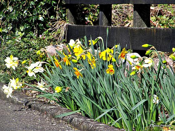 Spring Fence.