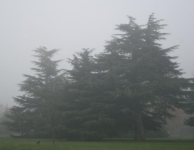 most foggy