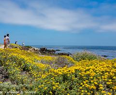 Pebble Beach 17 Mile Drive 001