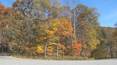 Color on Mt Jefferson