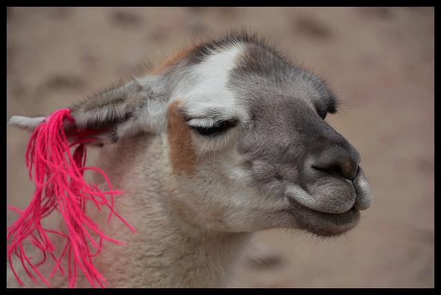 Gros Bisous de Pérou/ A big kiss from Peru
