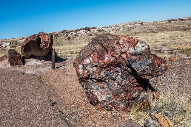 The Petrified Forest11, Arizona
