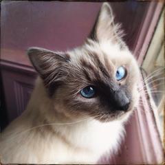 Dans le bleu de ses yeux .