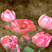 My Textured Tulips