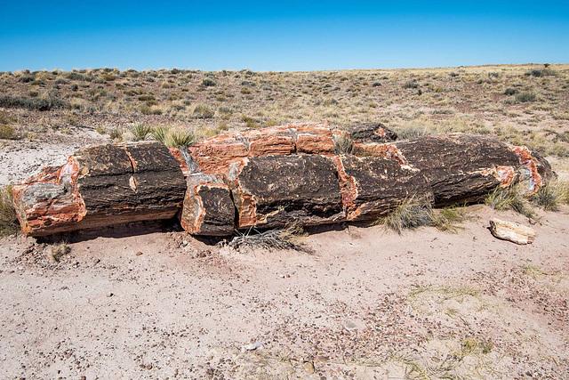 The Petrified Forest15, Arizona