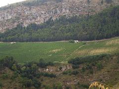 Vineyards on Sicilian countryside.