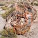 The Petrified Forest17, Arizona