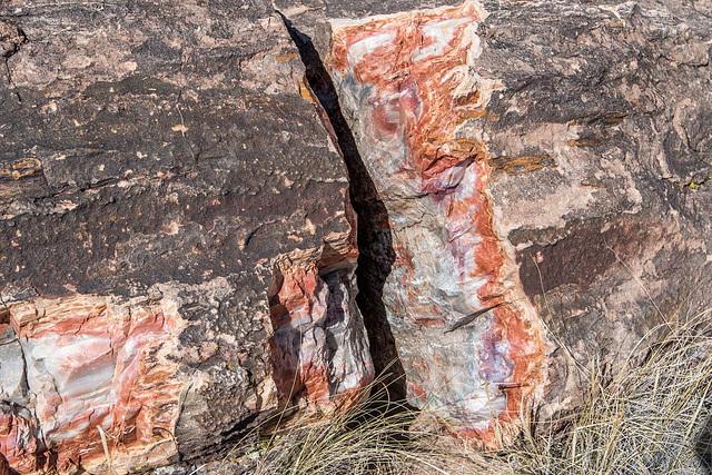 The Petrified Forest19, Arizona